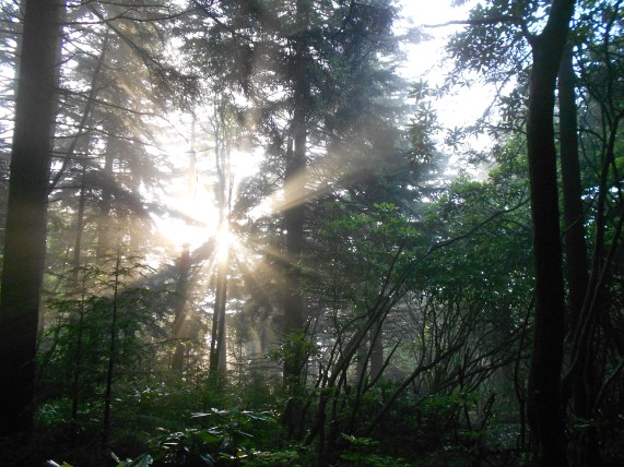 Mornings in the woods